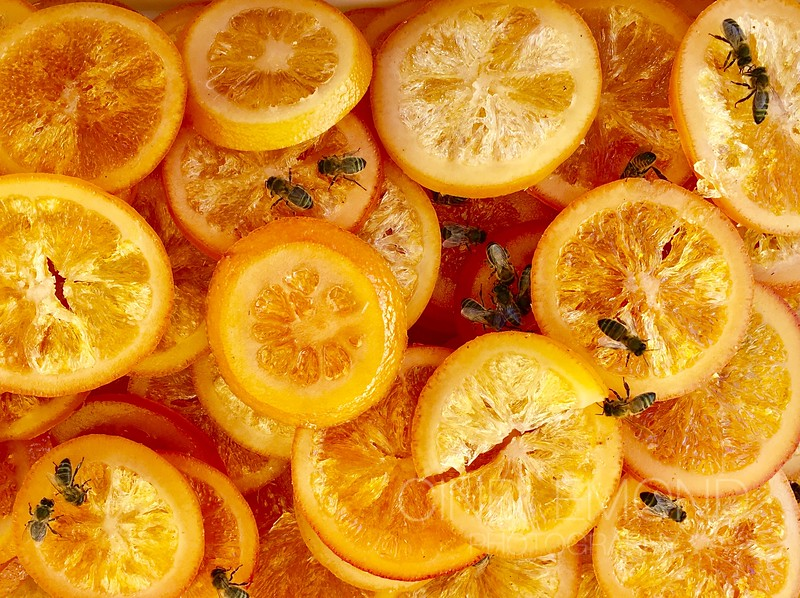 """6 """"Candied Fruit as Sweet as Honey to a Bee"""" IMG_6041.jpg"""