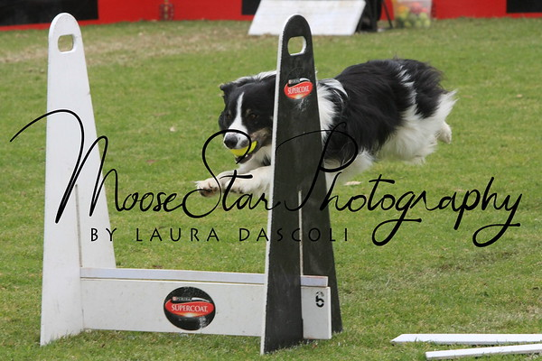 Flyball Nationals 2013 (Sun PM)