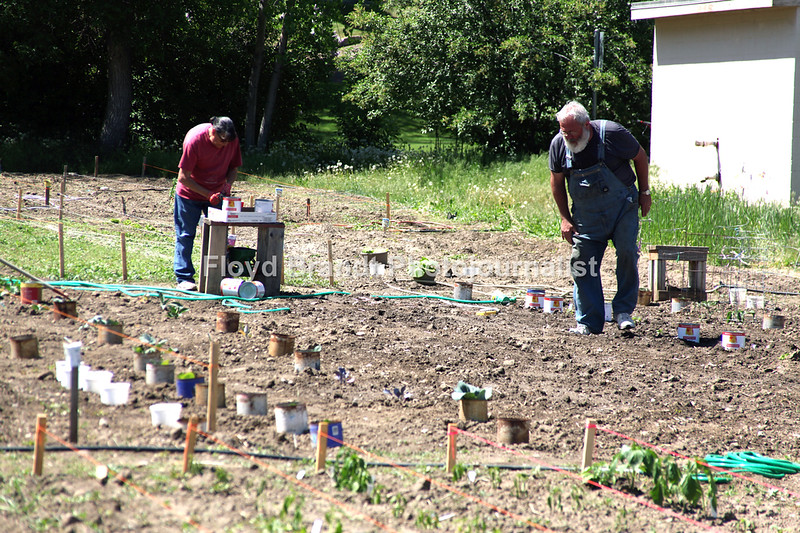 Havre Daily News/Floyd Brandt  Marlene Shulrand (left) nd husband Dale work on their gardening spot at the Community garden Tuesday
