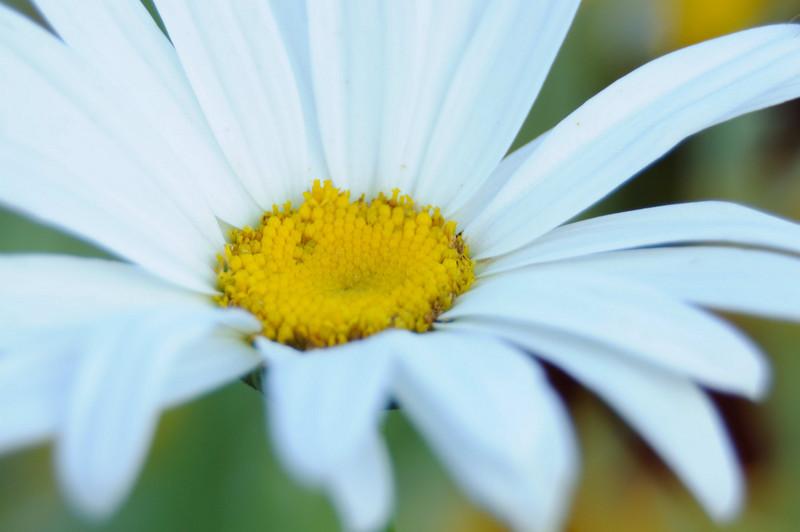 flowers_20080714-025.jpg