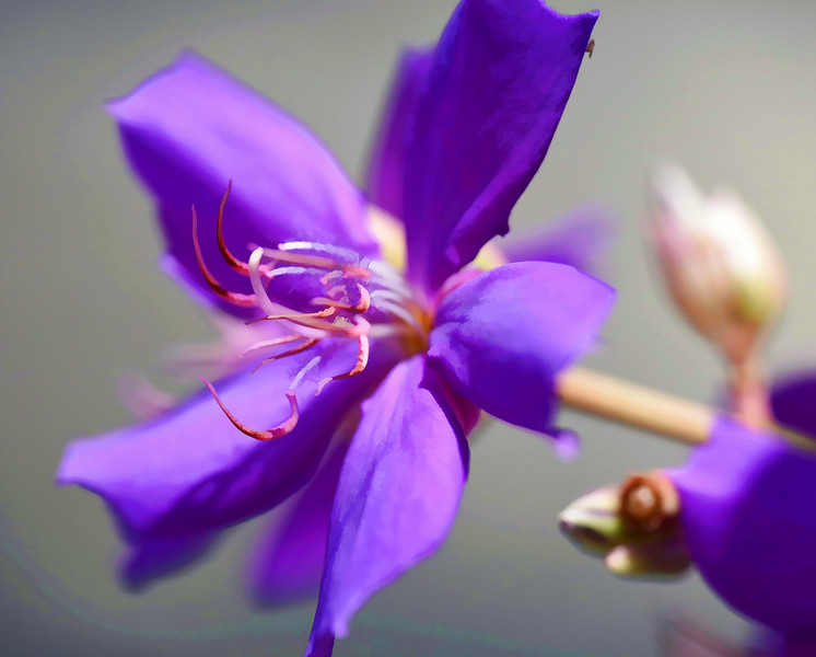 At Home with the Nikon D4s and Sigma 180 f/2.8 Macro