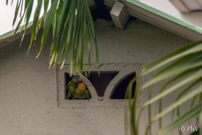 Our new neighbours the Prikichi family