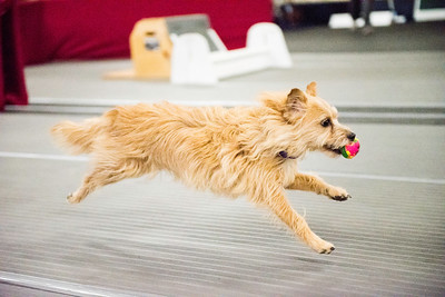 MIM 2016 Flyball Tournament  Friday