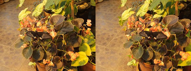 2011-03-24, Butterfly House (3D RL)