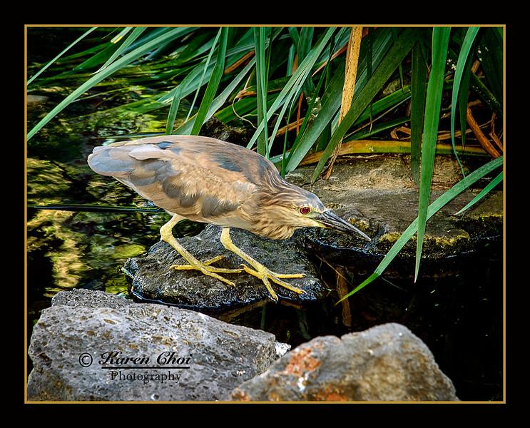 z sm Bird in pond.jpg