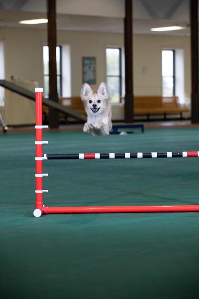 SPCA_Agility-11.jpg