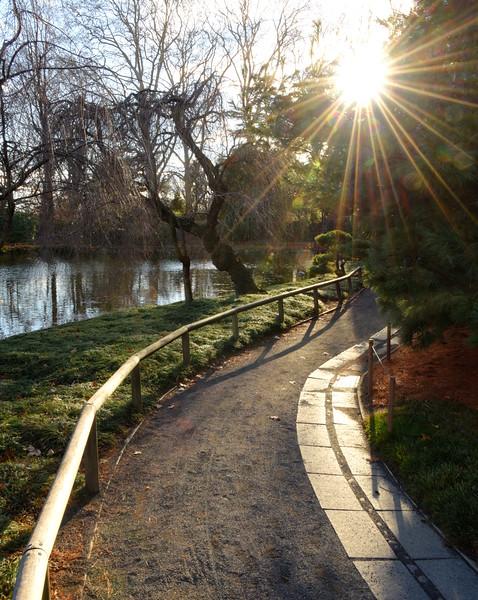 Sunlight Along the Path