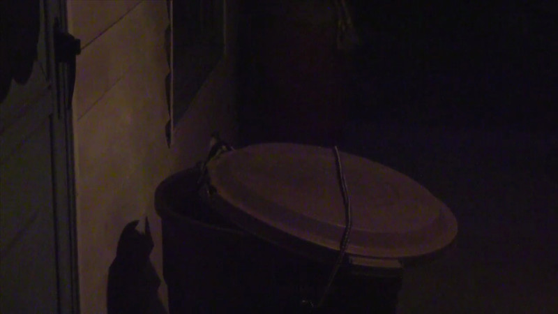 Raccoon Raid 7-22-12