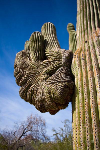 02.05.09 - Desert Botanical Garden