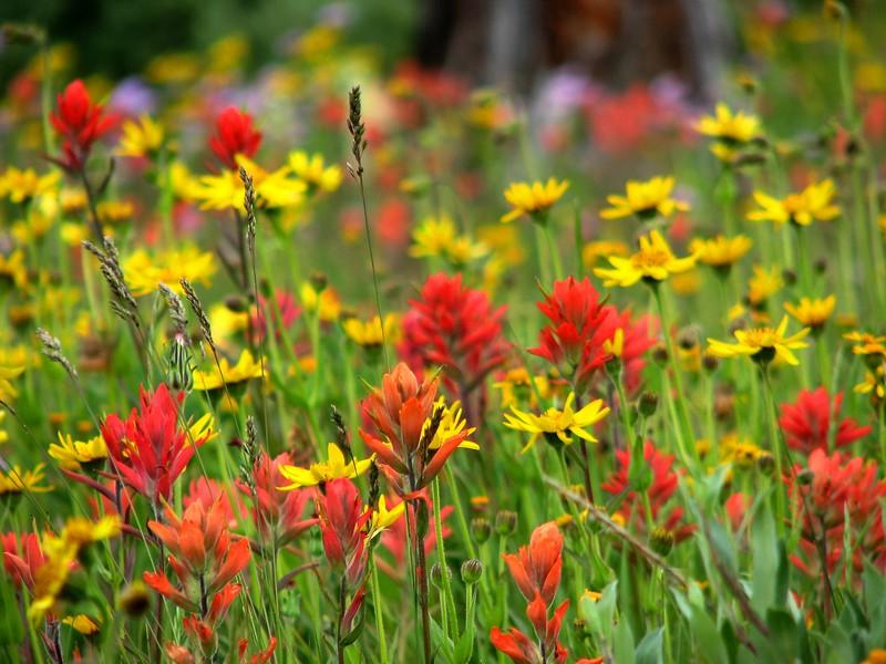 amh FLOWERS (1337).jpg