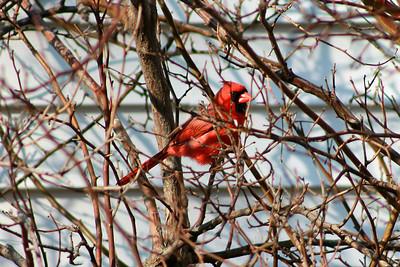 Birds of Spring - 2013