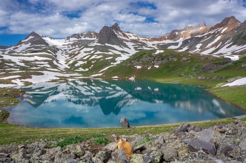 Ice_Lake_Marmot.jpg