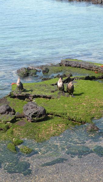 Galapagos2 549.JPG