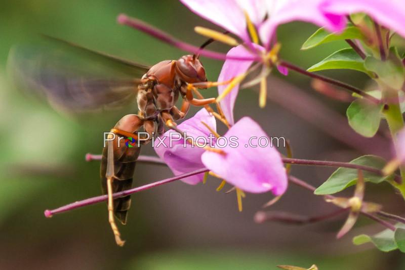 Wasps 5-16-15