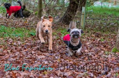 Citidogs Creche in the Woods