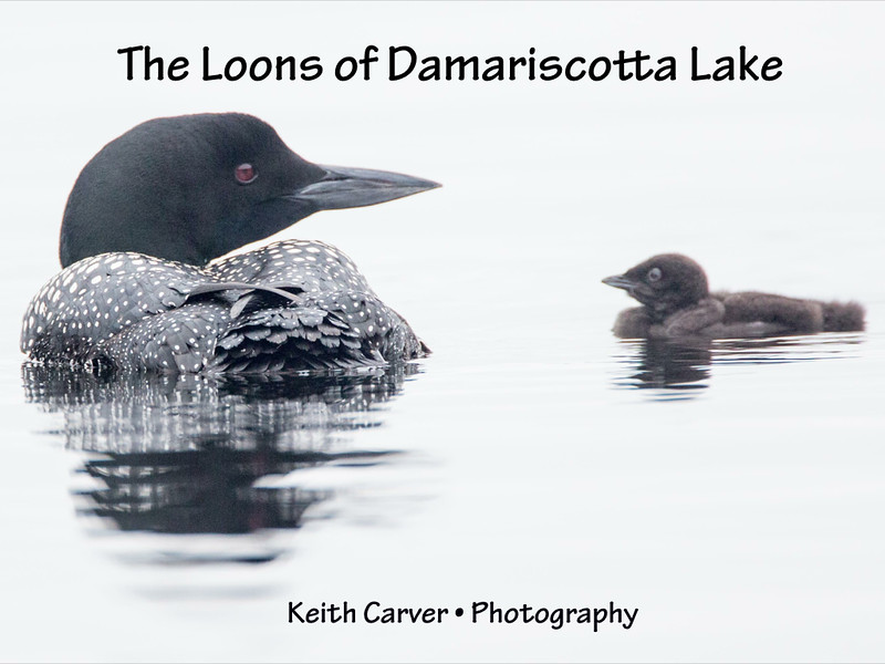The Loons of Damariscotta Lake slides.001.jpg