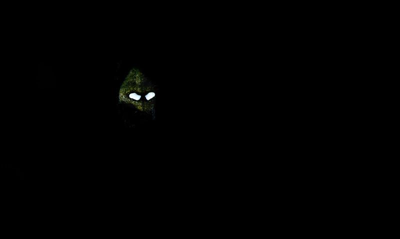 Mysterious-spider-mask-agumbe-1.jpg