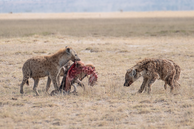 Jay Waltmunson Photography - Kenya 2019 - 145 - (DSCF3969).jpg