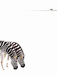Tim Keane - Zebra Plain