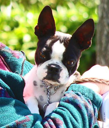Solano County Fairgrounds AKC Dog Show