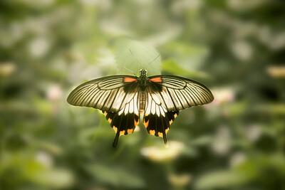 2018 - Butterfly 001