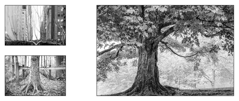 Forest Within_saddle_17.jpg