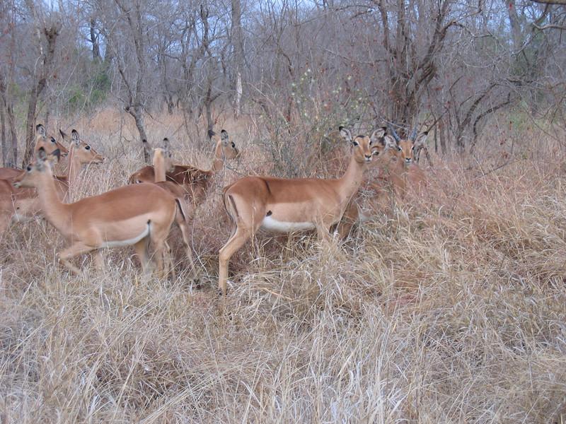 On safari Kruger.JPG