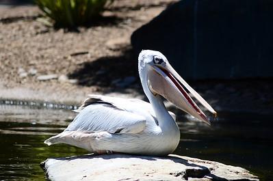 Safari (Wild Animal) Park - May 4, 2011