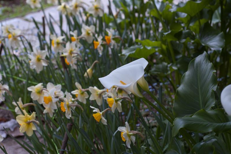 2011-04-20_2952.jpg