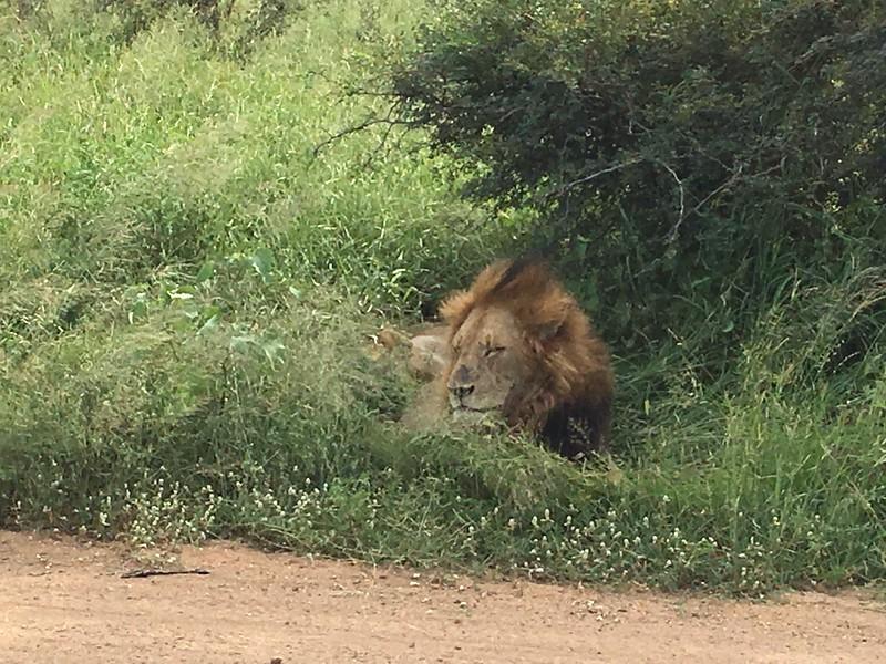 Lion siting - Dan Poag