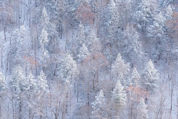 Frozen woods