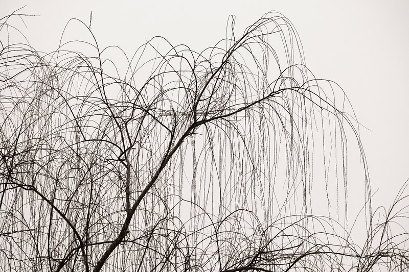 2021-01-24 Tree in Fog_DSF0218.jpg