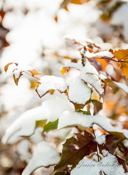 VA_Snow_ART_JOP-0175.jpg
