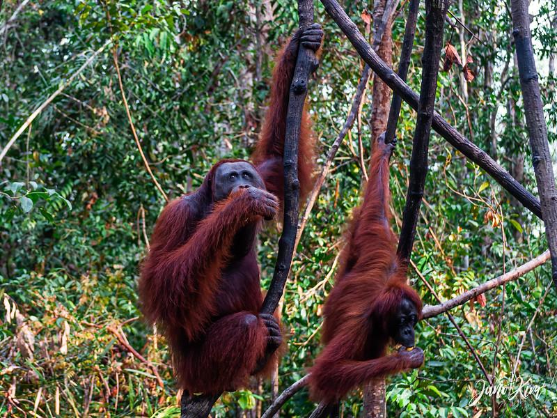 2012.10.07_Borneo_DSC_6865-Edit-Juno Kim.jpg