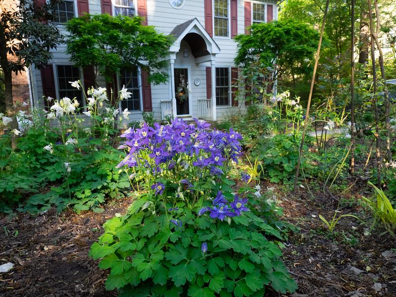 Garden_apr16-4170041.jpg