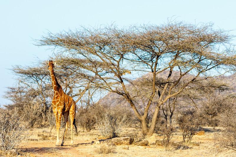 Kenya 2015-01427.jpg