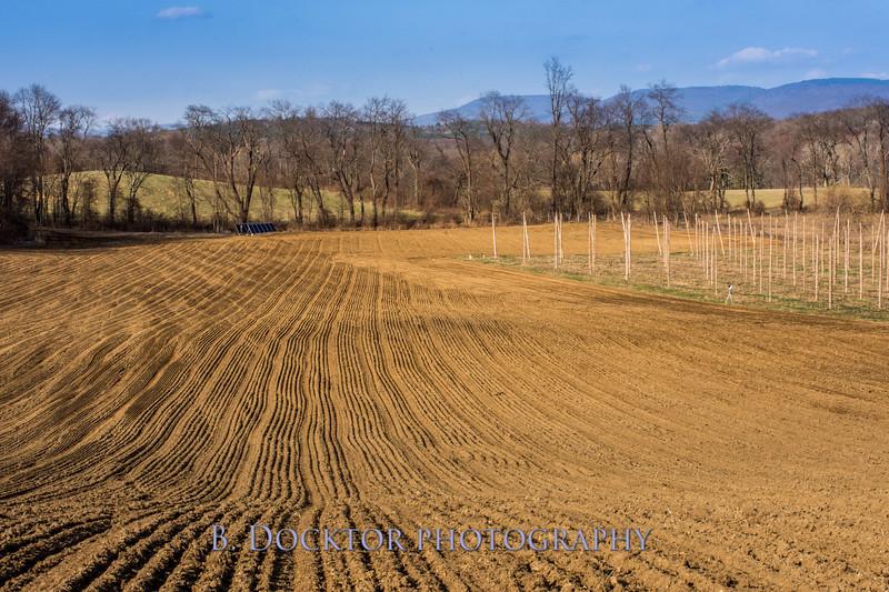 Hudson Valley Hops & Grains-23.jpg