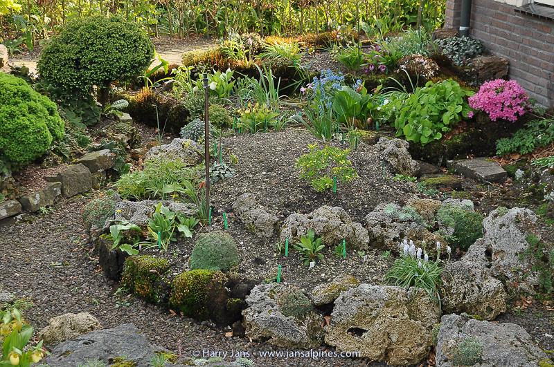 front garden, Gypripediun bed