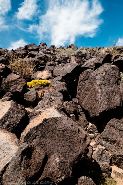 Petroglyph National Monument Collection