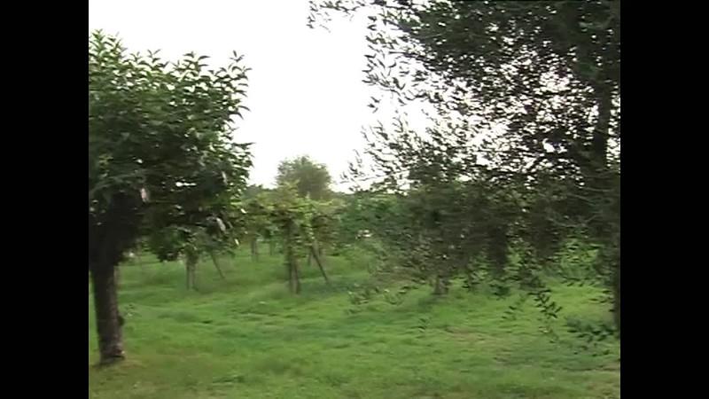 Italy 2004 part 2.mp4