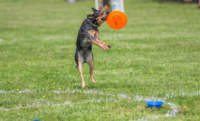 Maryland Dog Fest 4/29/17