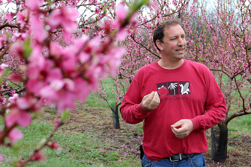 . Dave Dumaresq with Farmer Dave\'s talks about the peaches at Hill Orchard in Westford, which he helps run, on Wednesday, April 26, 2017. Farmers were pleasantly surprised to see blossoms on their peach trees this year after last year\'s crop failure in the state due to the harsh winter. SUN/JOHN LOVE