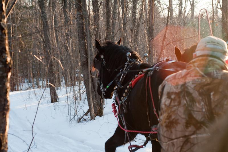 HorseRide-43.jpg