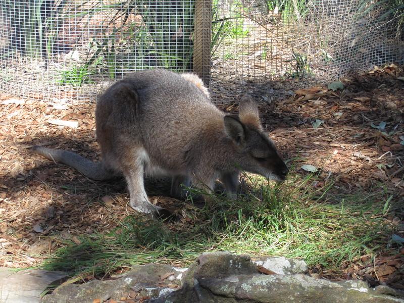 Sydney - Sydeny Zoo-62.JPG