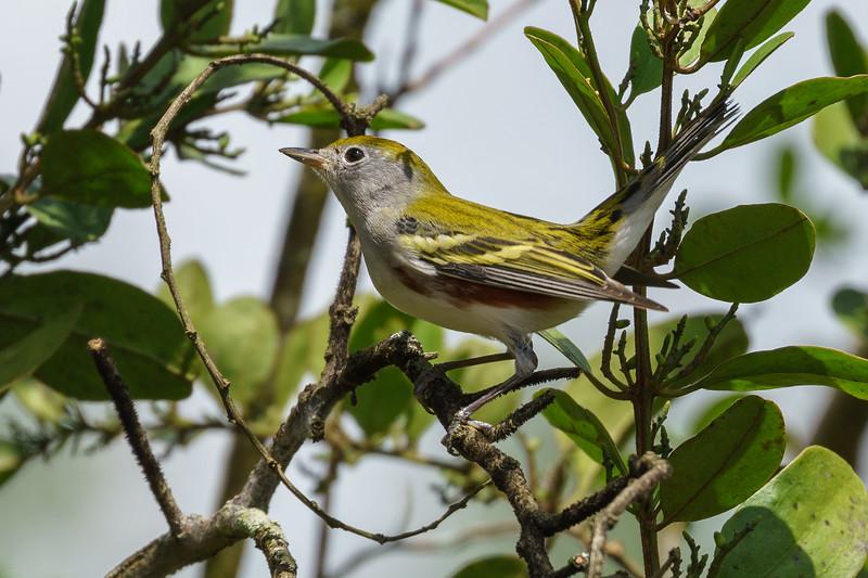 Costa Rica 2015-4654.jpg