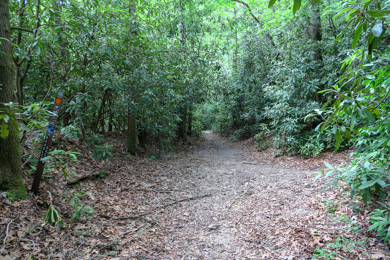 Riverside/Bradley Creek Trail Junction -- 2,400'