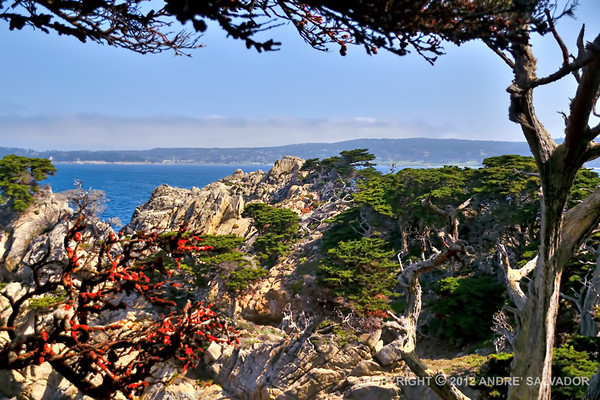 CALIFORNIA - POINT LOBOS STATE NATURAL RESERVE