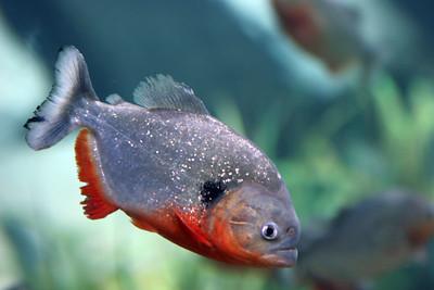 2005 Georgia Aquarium