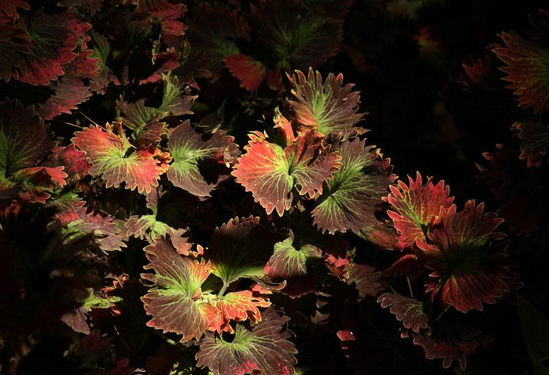 IMG_0840 PS Flowers.jpg