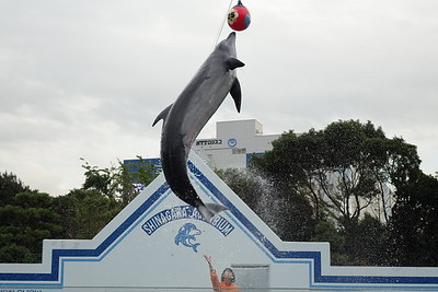 Shinagawa Aquarium 2016